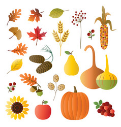 autumn fruit and foliage vector image