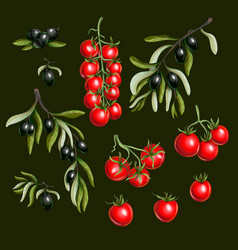 black olives branches and cherry tomato isolated vector image