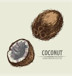 Digital detailed coconut hand vector