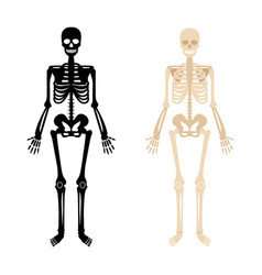 human skeleton set vector image