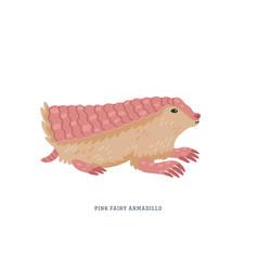 Pink fairy armadillo or chlamyphorus truncatus vector