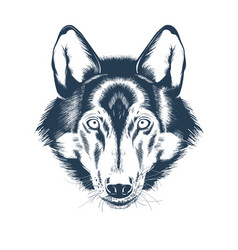 Portrait wolf head on white background vector