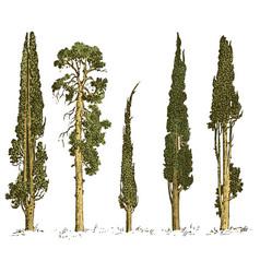 Set hand drawn trees italian cypress and pine vector