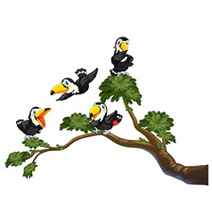 Toucan and tree vector image
