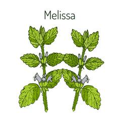 melissa hand drawn vector image
