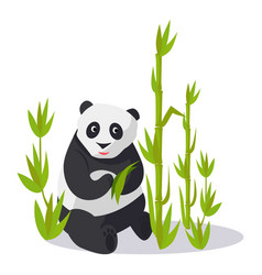 panda sitting between bamboo holds green leaves vector image
