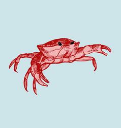 crab line art vector image