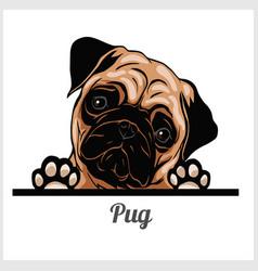 pug - peeking dogs - breed face head isolated vector image