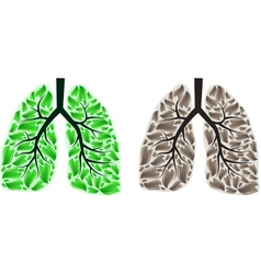 Two lungs vector image