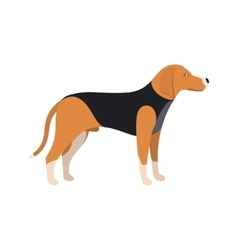 Beagle dog - color serious dog beagle breed vector