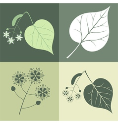 Lime tree vector