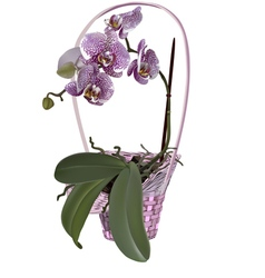 Photorealistic wicker floral basket with orchid vector