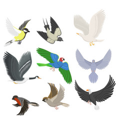 Set of different flying birds vector