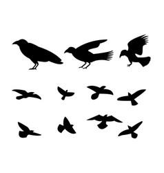 silhouette flying raven bird vector image