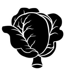 Cabbage silhouette icon vector