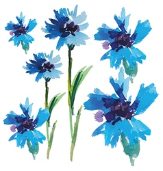 Floral collection of watercolor cornflowers vector