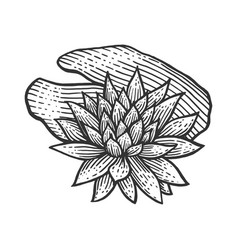 nymphaea water lily flower sketch engraving vector image