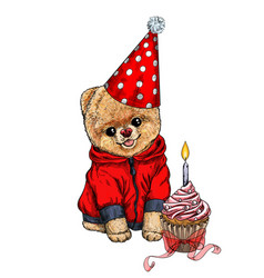 pomeranian toy dig dressed in birthday hat vector image