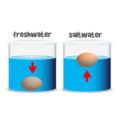 Science experiment for freshwater and saltwater vector
