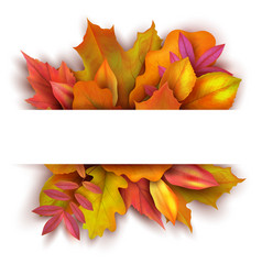 autumn background with forest fall leaves october vector image