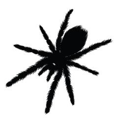 Big Spider silhouette vector