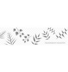 elegant floral template vector image