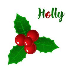 Hand drawn holly ilex branch with berry and vector