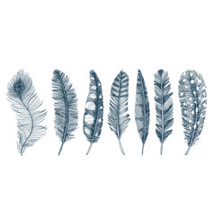 set of rustic realistic feathers of different vector image