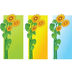 sun flowers vector image