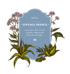 Badge design with colored aloe nettle valerian vector