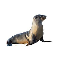 sea lion seal from a splash watercolor vector image