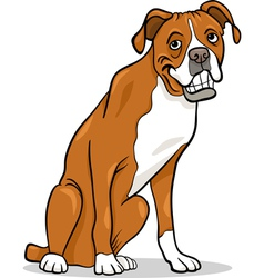 boxer purebred dog cartoon vector image