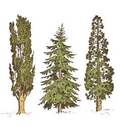 Set hand drawn trees italian cypress and stone vector