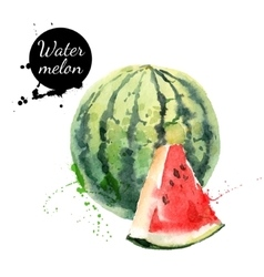 Hand drawn watercolor painting watermelon on white vector image