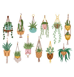 Plant in hanging pots houseplant hang on rope vector