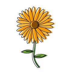 flower natural decoration floral petal icon vector image