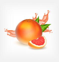 Grapefruiit with slice vector