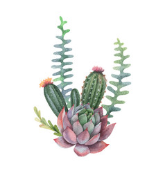 watercolor bouquet cacti and succulent vector image