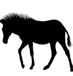 Zebra silhouette vector image