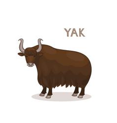 A cartoon yak with curly horns isolated on a vector