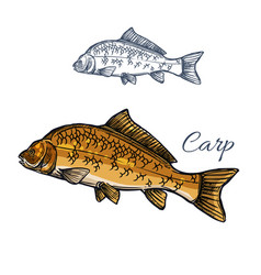 carp fish isolated sketch for food themes design vector image