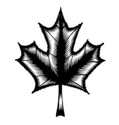 Decorative silhouette maple leaf vector