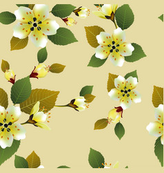 Seamless spring background with white flowers with vector