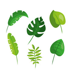 tropical leaves foliage frond plant botanical vector image