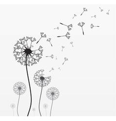 Seven dandelions vector image
