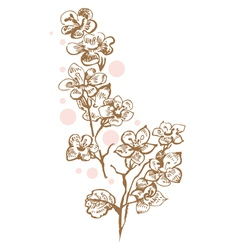 cherry flowers vector image vector image