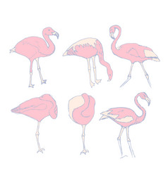 a set of sketches of pink flamingos vector image