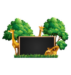 Blackboard with wild giraffes in park vector