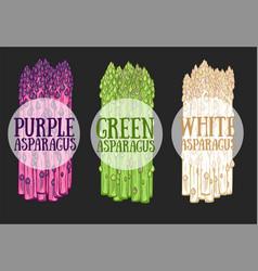 Organic asparagus farm food vector
