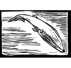 Sei Whale vector image vector image